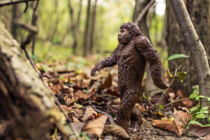 Del mono al hombre: la evolución del ser humano en elPaleolítico